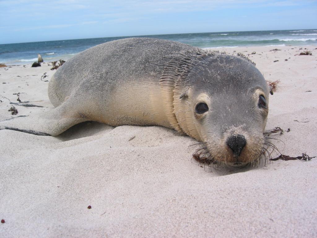 Kanguruh Island ist genial!