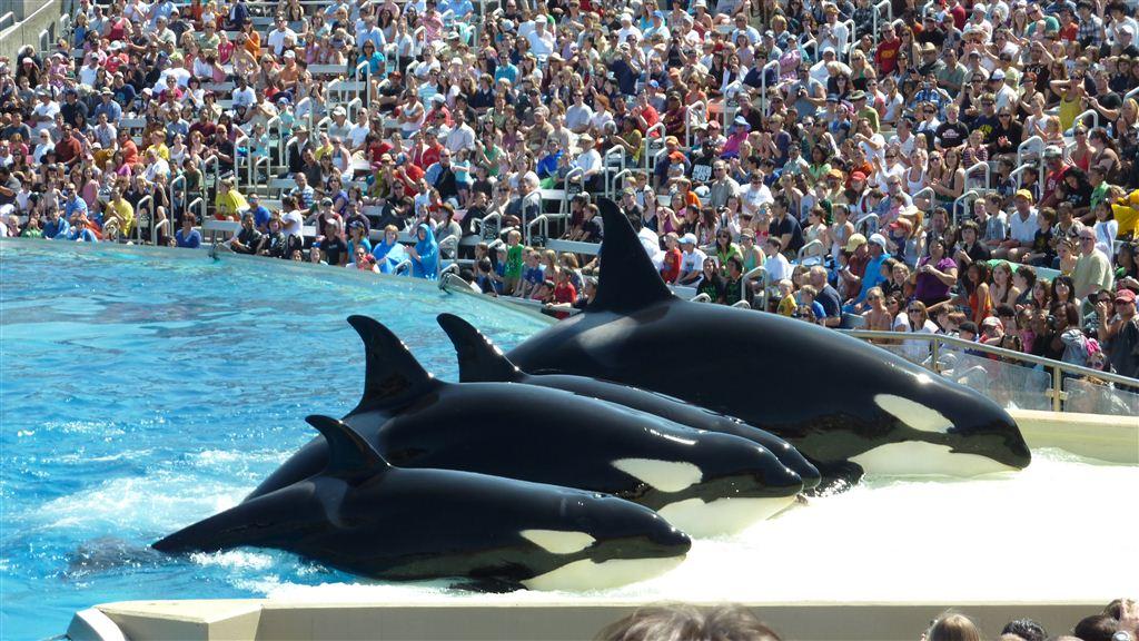 San Diego: Parkplatz-Sorgen und Sea World
